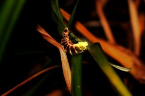 Glow worms use bioluminescence to create a glow similar to how glow sticks glow using chemiluminescence